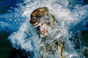 Hunde unter Wasser – eine ganz neue Erfahrung