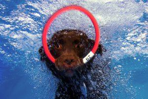Hunde Unterwassershooting – Abgetaucht mit Vierbeinern